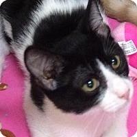 Adopt A Pet :: Jo Jo - Houston, TX