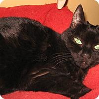 Adopt A Pet :: India - Colmar, PA