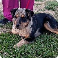 Adopt A Pet :: Reese $250 - Seneca, SC