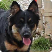 Adopt A Pet :: Sierra - Hagerstown, MD