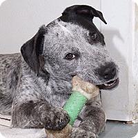 Adopt A Pet :: Detroit - Sudbury, MA