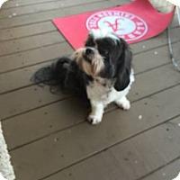 Adopt A Pet :: Cali - Graceville, FL