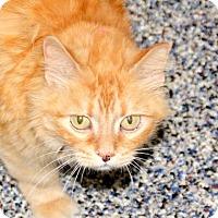 Adopt A Pet :: Lili - Fairport, NY