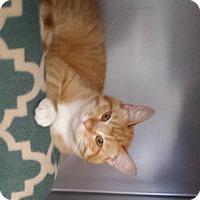 Adopt A Pet :: Karlen - Stillwater, OK
