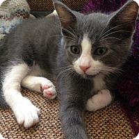Adopt A Pet :: Thufir - Homewood, AL