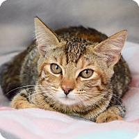 Adopt A Pet :: Reece - Dublin, CA