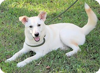 Shepherd (Unknown Type) Mix Dog for adoption in Millington, Tennessee - Skye
