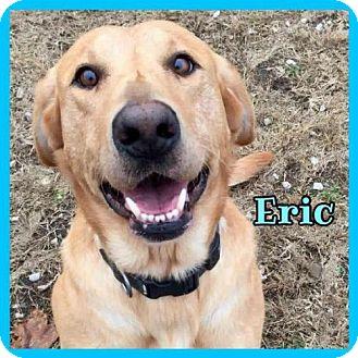 Labrador Retriever Dog for adoption in Jasper, Indiana - Eric