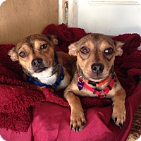 Adopt A Pet :: Bruce - Sacramento, CA
