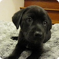 Adopt A Pet :: Baby Kermit - Rockville, MD