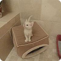 Adopt A Pet :: Timmy - Phoenix, AZ