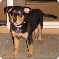 Adopt A Pet :: Brewster - Phoenix, AZ