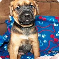 Adopt A Pet :: Quinn - Rome, NY