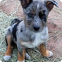Adopt A Pet :: Mia - Waller, TX