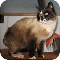 Adopt A Pet :: Elmore - Shelton, WA