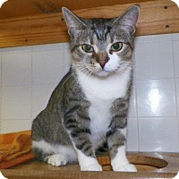Adopt A Pet :: Aries - Dover, OH