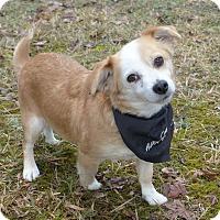 Adopt A Pet :: Meg - Mocksville, NC