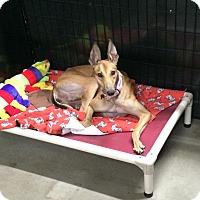Adopt A Pet :: Ellen - Swanzey, NH