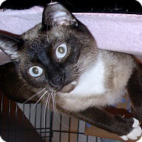 Adopt A Pet :: Tee - Chattanooga, TN
