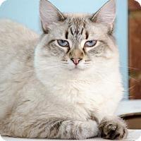 Adopt A Pet :: Diamond141086 - Atlanta, GA