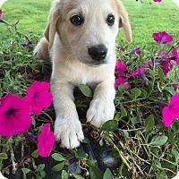 Adopt A Pet :: Jaydn - Russellville, KY