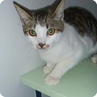 Adopt A Pet :: Gavin - Hamburg, NY