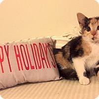 Adopt A Pet :: Fuscia - Addison, IL