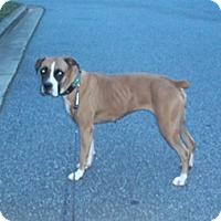 Adopt A Pet :: Punkin - Wilmington, NC