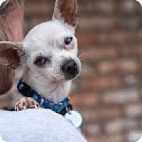Adopt A Pet :: Lenny - San Marcos, CA