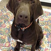 Adopt A Pet :: Lucille 3 - Chicago, IL