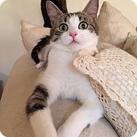 Adopt A Pet :: Ripley - McDonough, GA