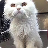 Adopt A Pet :: Sky - Davis, CA