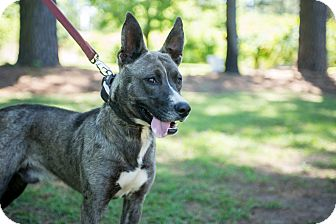 Hound (Unknown Type) Mix Dog for adoption in Tarboro, North Carolina - Ballot