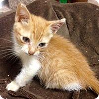 Adopt A Pet :: Heddy - River Edge, NJ