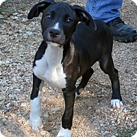 Adopt A Pet :: Mowgli - Towson, MD