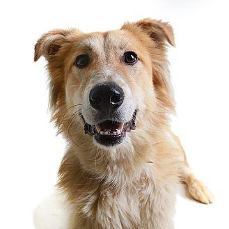 Collie Mix Dog for adoption in Wilmington, Delaware - Mazyoun (Rafiki)