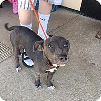 Adopt A Pet :: PANDORA - Elk Grove, CA