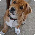 Adopt A Pet :: Cosmo Kramer