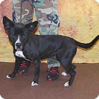 Adopt A Pet :: MERYL - Louisville, KY