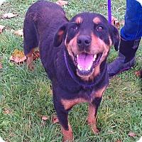 Adopt A Pet :: Rachel - Metamora, IN
