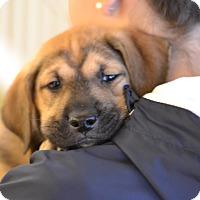 Adopt A Pet :: Satin - Fabric Litter - Acworth, GA