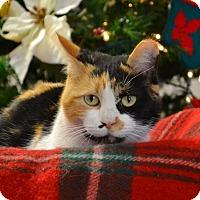 Adopt A Pet :: Callie - Lebanon, MO