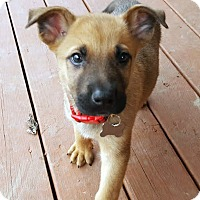 Adopt A Pet :: Jolly-Pending! - Detroit, MI