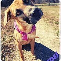 Adopt A Pet :: Mercedes - Converse, TX