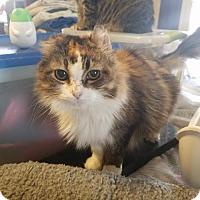 Adopt A Pet :: Tahira - Grand Ledge, MI