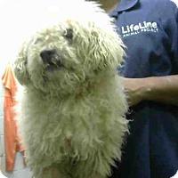 Adopt A Pet :: MARQUIS - Atlanta, GA