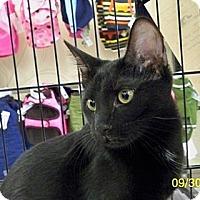 Adopt A Pet :: Jinx V - Sacramento, CA