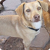 Adopt A Pet :: Captain - San Ysidro, CA