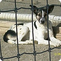 Hound (Unknown Type)/Pointer Mix Dog for adoption in Mexia, Texas - Drew