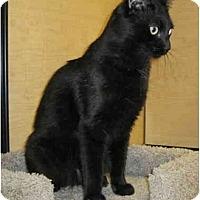 Adopt A Pet :: Raisin - Irvine, CA